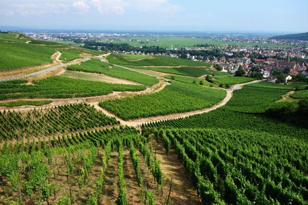 The Route Du Vin In Alsace Rick Steves Travel Blog