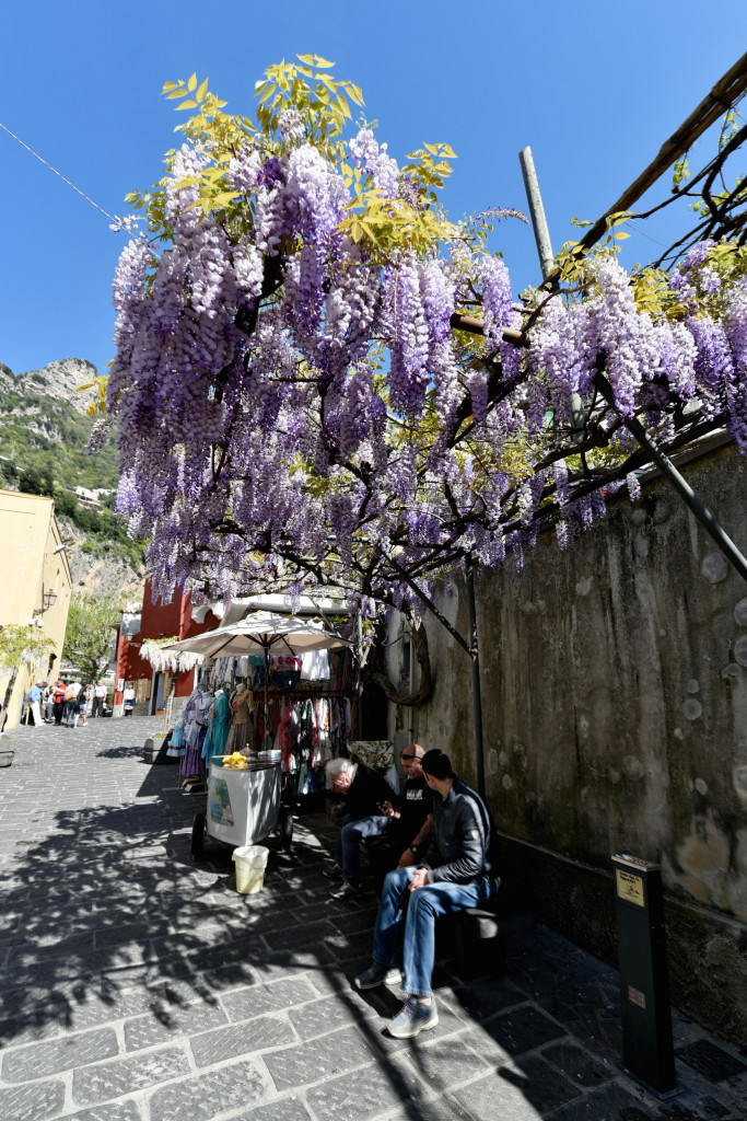 Yep, more wisteria...this time in Positano. The stuff is everywhere.