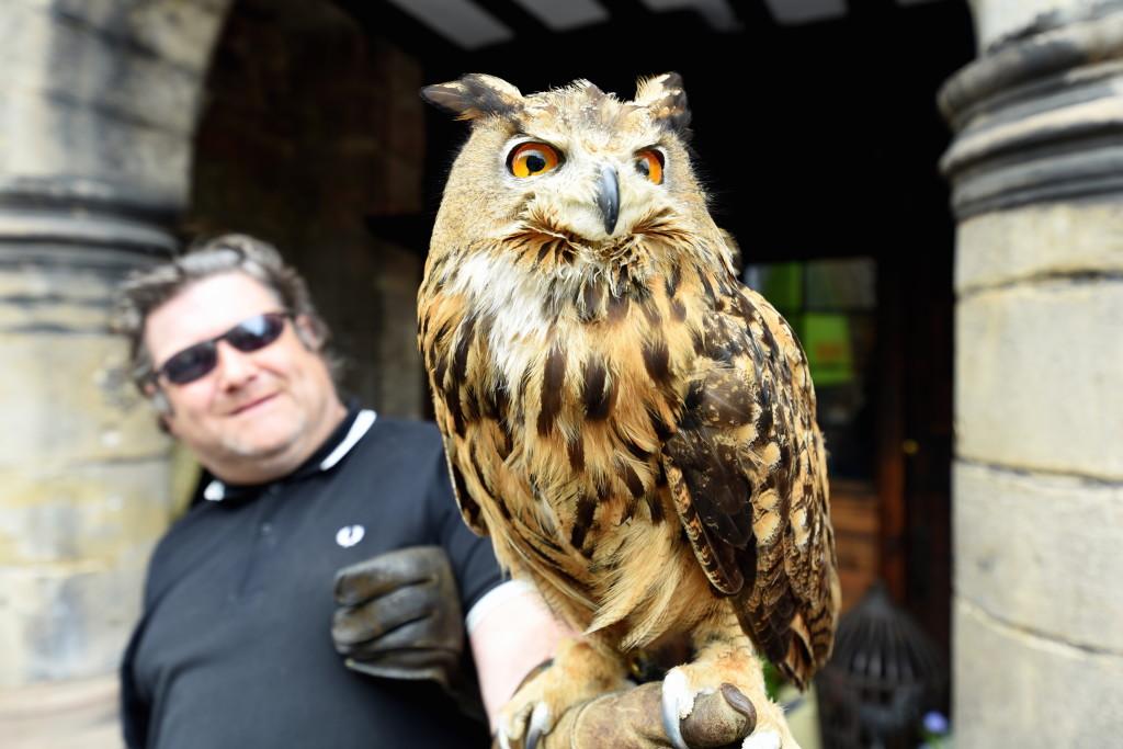 Royal Mile Owl