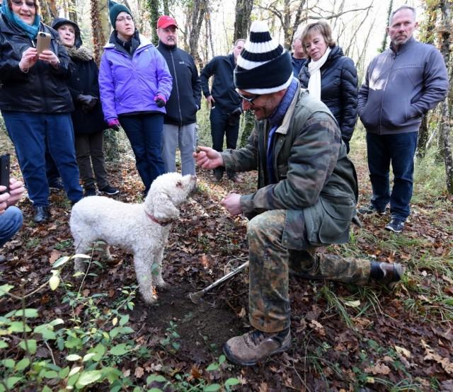 cameron-tuscany-truffle-dog