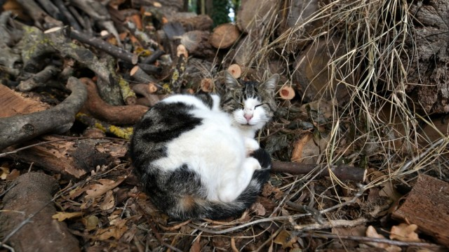 cameron-tuscany-woodpile-cat