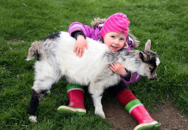 Haafell farm, Iceland